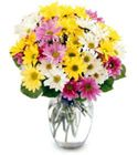 Delightful Dasiy Bouquet